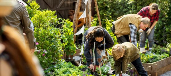 Gardening may help cancer survivors eat better