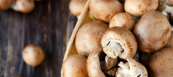 Mushrooms rich in potentially anti-aging antioxidants